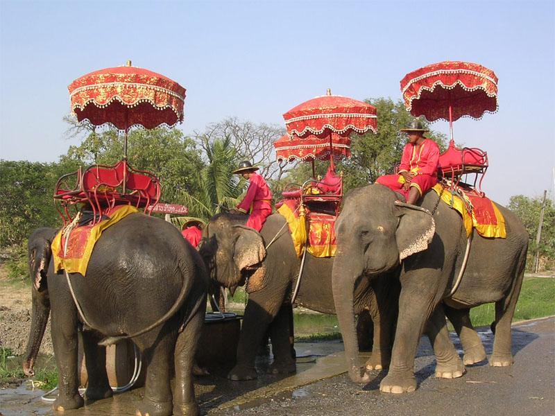 <b>Elefanti_Thailandia </b>