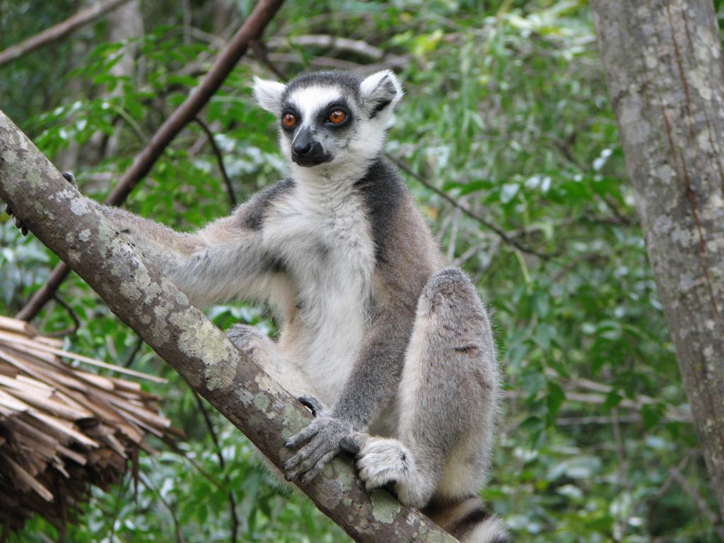 <b>Lemure_Madagascar</b>