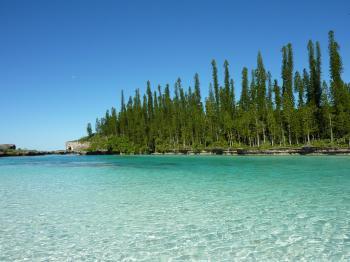 0_Araucaria_columnaris_New_Caledonia.jpg
